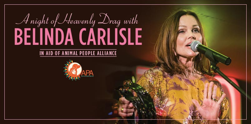 A Night of Heavenly Drag with Belinda Carlisle.